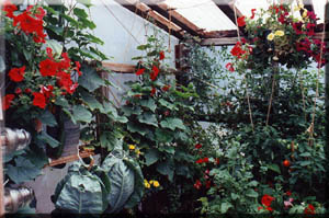 beautiful flowers and vegetables grow quickly in the midnight sun.