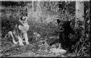 Tok history includes huskies and bears.