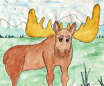 The story of this moose is a winter survival story.